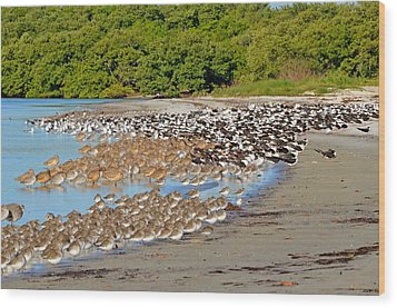 Wood Print featuring the photograph Four Species Of Birds At Roost On Tampa Bay Beach by Jeff at JSJ Photography