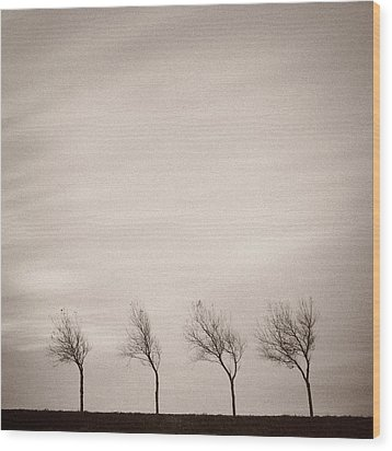 Four Trees Wood Print by Dave Bowman