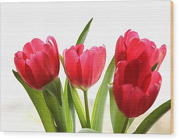 Four Tulips Wood Print by Menachem Ganon