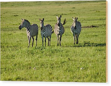 Four Zebras Wood Print by Menachem Ganon