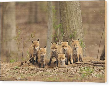 Fox Family Portrait Wood Print by Everet Regal