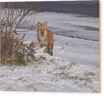 Fox In My Yard Wood Print