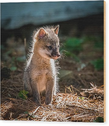 Fox Kit Wood Print by Paul Freidlund