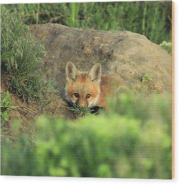 Fox Kit V Wood Print