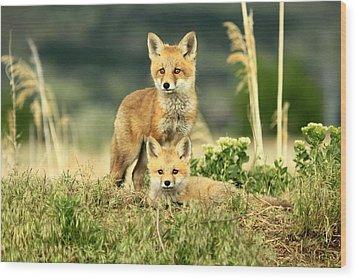 Fox Kits II Wood Print