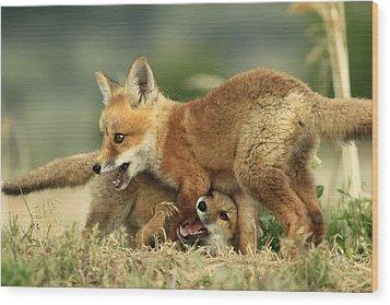 Fox Kits Wood Print