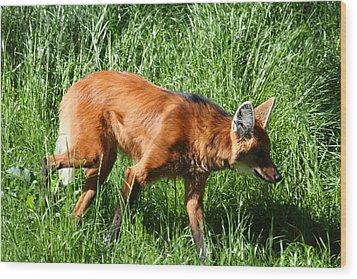 Fox - National Zoo - 01137 Wood Print by DC Photographer