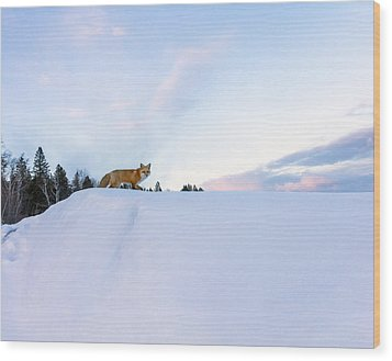 Fox Of The North IIi Wood Print by Mary Amerman