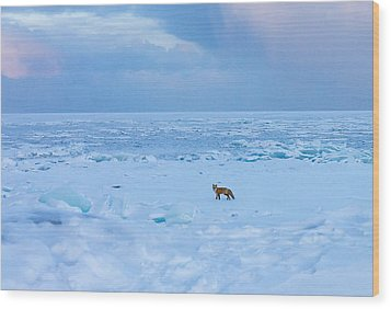 Wood Print featuring the photograph Fox Of The North Country Iv by Mary Amerman