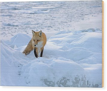 Fox Of The North II Wood Print by Mary Amerman