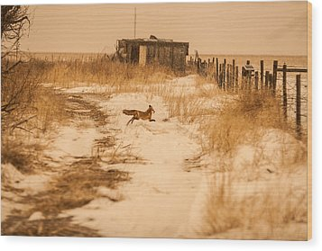 Fox On The Run Wood Print by Shirley Heier