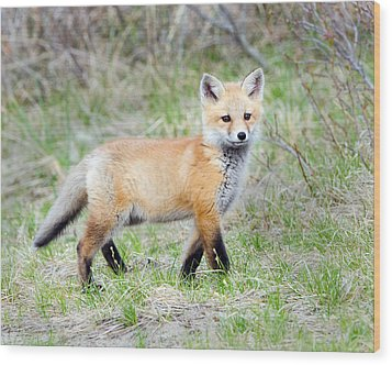 Wood Print featuring the photograph Fox Pup  by Stephen Flint