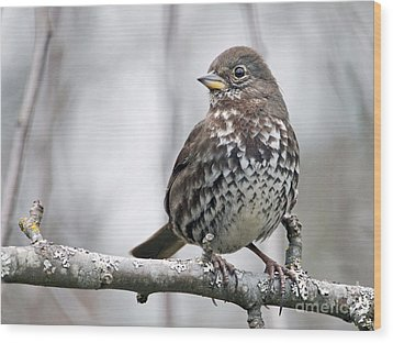 Wood Print featuring the photograph Fox Sparrow by Inge Riis McDonald