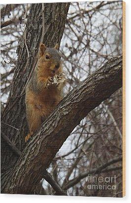 Fox Squirrel 1 Wood Print by Sara  Raber