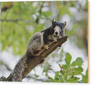 Fox Squirrel Wood Print by Cynthia Guinn