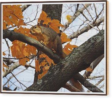 Fox Squirrel In Autumn Wood Print by Sara  Raber