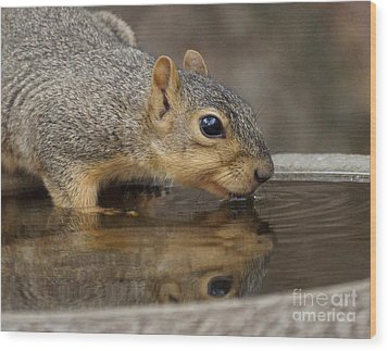 Fox Squirrel Wood Print by Lori Tordsen