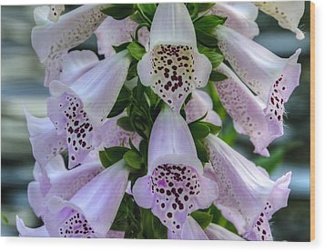 Foxglove At Waters Edge Wood Print by Penny Lisowski