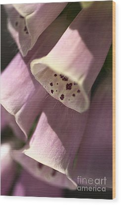 Wood Print featuring the photograph Foxglove by Joy Watson