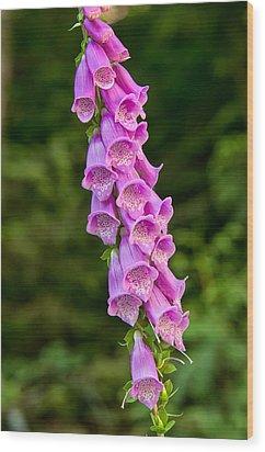 Foxglove Wood Print by Rich Leighton