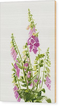 Foxgloves With White Background Wood Print by Sharon Freeman