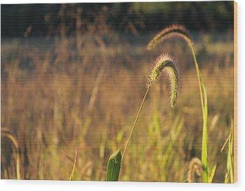 Foxtail Grass - Indian Summer Wood Print by Annette Gendler