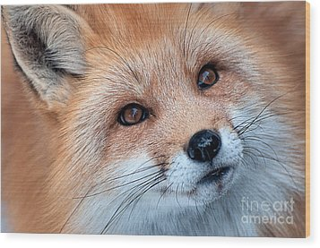 Wood Print featuring the photograph Foxy Lady by Bianca Nadeau