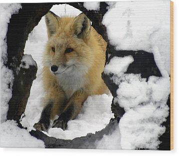 Foxy View Wood Print