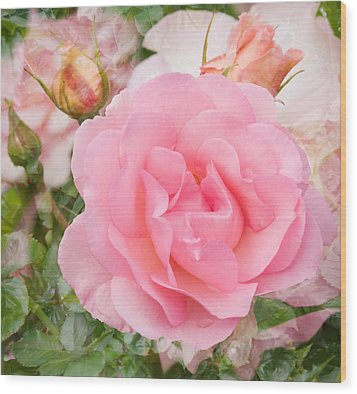 Fragrant Cloud Rose Wood Print by Jane McIlroy