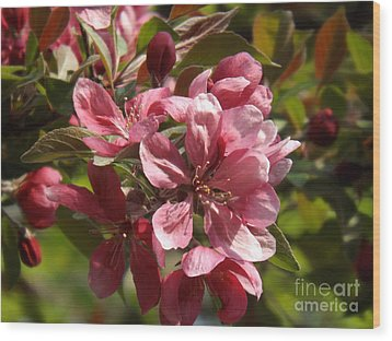 Fragrant Crab Apple Blossoms Wood Print by Brenda Brown