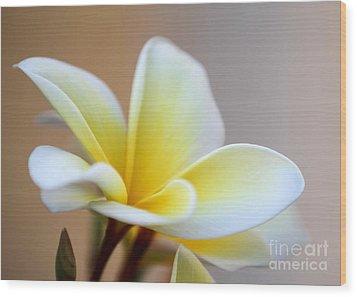 Fragrant Frangipani Flower Wood Print by Sabrina L Ryan