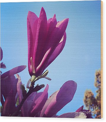 Wood Print featuring the photograph Fragrant Silence by Kerri Farley