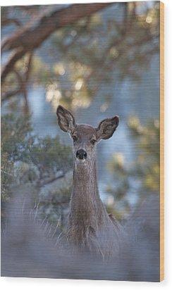Framed Deer Head And Shoulders Wood Print