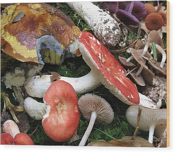 France Mushrooms From The Woods Wood Print by Dawn E Davis