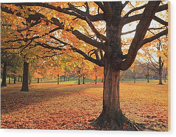 Francis Park Autumn Maple Wood Print by Scott Rackers
