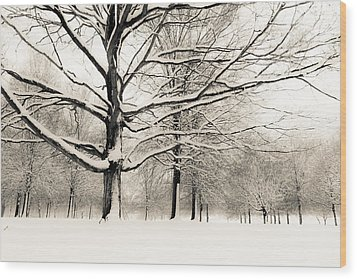 Francis Park In Snow Wood Print by Scott Rackers