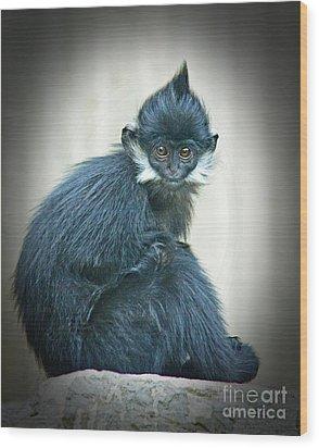 Francois Langur Monkey II Wood Print by Jim Fitzpatrick