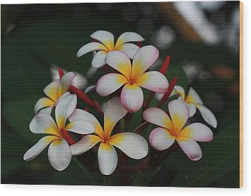 Wood Print featuring the photograph Frangipani Bouquet by Keith Hawley