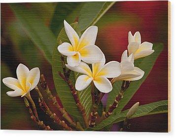 Frangipani - Plumeria Wood Print by Michelle Wrighton