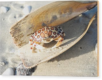 Frank The Spotted Crab Of Anna Maria Wood Print