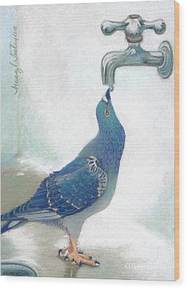 Frank's Pigeon Wood Print by Tracy L Teeter