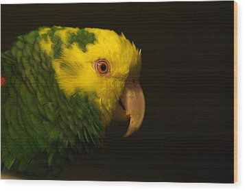 Wood Print featuring the photograph Fred The Amazon Parrot by Melissa Messick