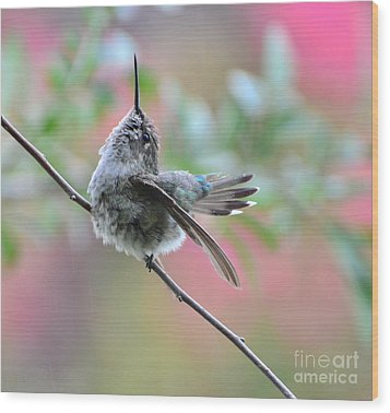Wood Print featuring the photograph Fredrick Singing In The Rain by Debby Pueschel