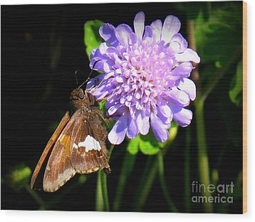 Silver Spotted Skipper Wood Print by Patti Whitten