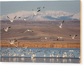 Wood Print featuring the photograph Freeze Out Lake Morning by Jack Bell