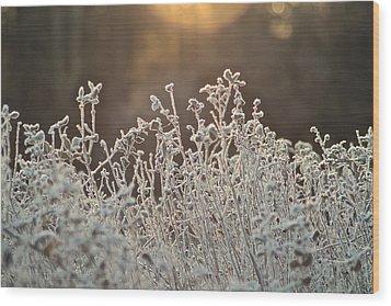 Freezing Cold Wood Print by Karen Grist