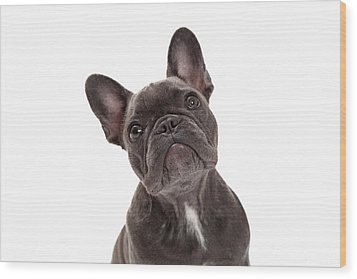 French Bulldog Closeup Wood Print