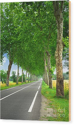 French Country Road Wood Print by Elena Elisseeva