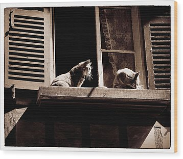 French Windowsill Cats In The Sun Wood Print