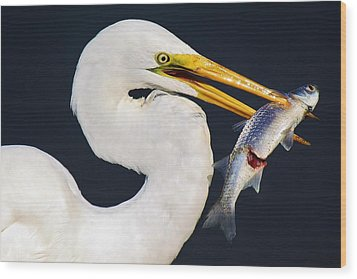 Fresh Catch Of The Day Wood Print by Paulette Thomas